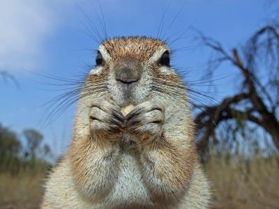 repel squirrels