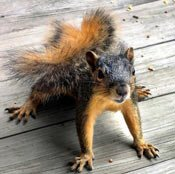 stop squirrels from eating
