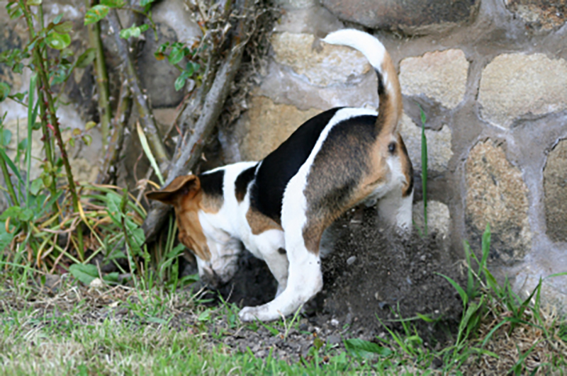 stop dogs from going in your yard