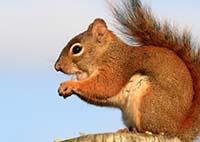 tips to repel squirrels