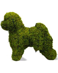 "Bichon Frise 19"" Topiary Mossed"