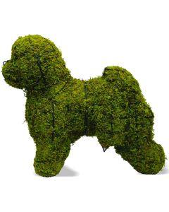 Bichon Frise Topiary