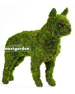 Boston Terrier Topiary