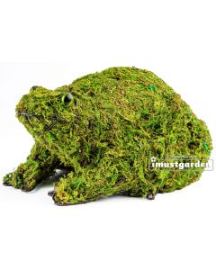 Frog Topiary