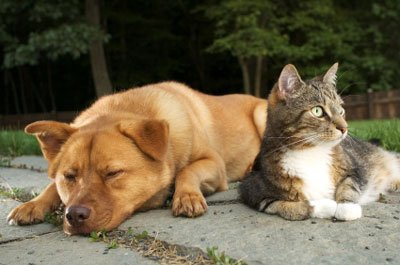 natural dog and cat repellent, won't harm pets