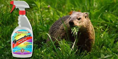 Groundhog Repellent Repel Groundhogs Get Rid of Groundhogs