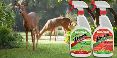 natural deer repellent safe for use around your home and pets