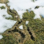 Prevent Winter Damage from Moles and Voles